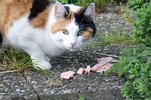 Kochen Für Katzen : 4 leckere rezepte f r katzen feinschmecker geliebte ~ Lizthompson.info Haus und Dekorationen