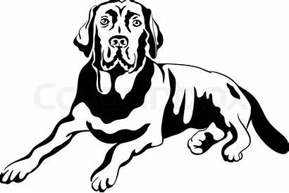 Dog Labrador Sketch Portrait Breed