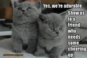 cat gestation period cat gestation period feline pregnancy timeline