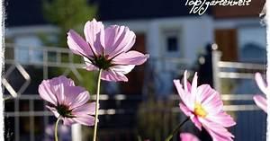 Landhaus Garten Blog : buchtipp landhaus cottage g rten g rtnern im englischen stil topfgartenwelt blog ber ~ One.caynefoto.club Haus und Dekorationen