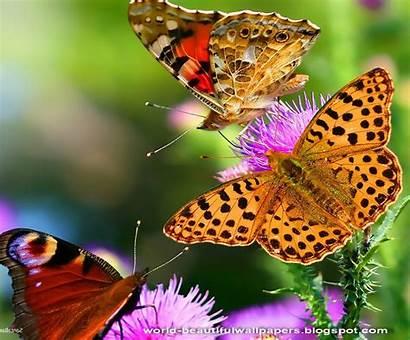 Butterflies Wallpapers Butterfly Wallpapersafari