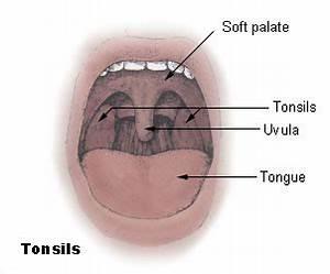 Tonsil - Wikipedia