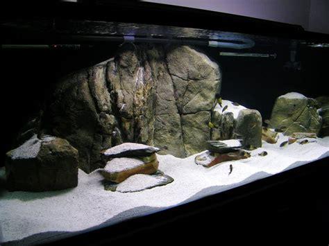 Aquascaping Cichlid Aquarium by Aquascape Idea Lake Malawi Mbuna Aquarium Cichlid