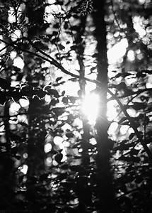 Black and White GIFs