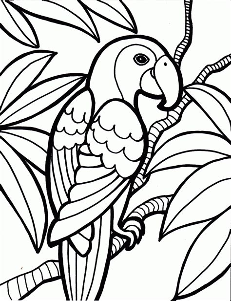 bird coloring page   bird coloring pages
