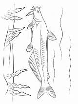 Catfish Coloring Pages Drawing Fish Printable Minecraft Getdrawings sketch template
