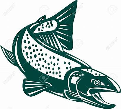 Salmon Trout Jumping Clipart Fish Vector Clipground