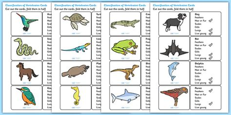 classification  vertebrates cards vertebrates