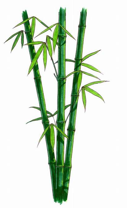 Bamboo Clipart Transparent Background Cartoon Plant Freeiconspng