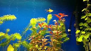 Sauerstoff Im Aquarium : sauerstoff produktion im aquarium youtube ~ Eleganceandgraceweddings.com Haus und Dekorationen
