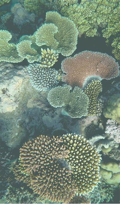Coral Reef Annual Summary Condition Aims Report