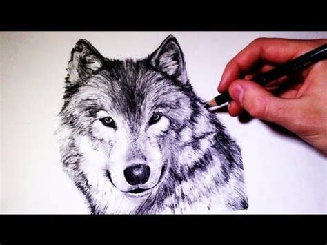 draw  realistic wolf time lapse youtube