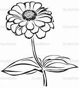 Zinnia Coloring Flower Drawing Sketch Printable Getcolorings Flowers Zenia Drawings Getdrawings Clipartsheep sketch template