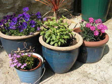 plante exterieur ombre en pot plantes en pot g 233 n 233 ralit 233 s jardinage bio