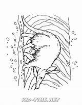 Aardvark Coloring sketch template