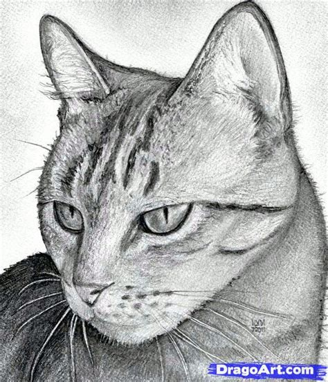 draw  cat head draw  realistic cat step  step