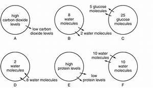 Diagram A In Figure 3