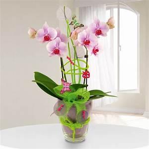Orchideen Im Glas : exklusives orchideengesteck phalaenopsis in rosa im glas ~ A.2002-acura-tl-radio.info Haus und Dekorationen