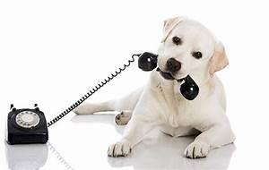 Petme il piu grande motore di ricerca per dog sitter for Puppy dog sitter