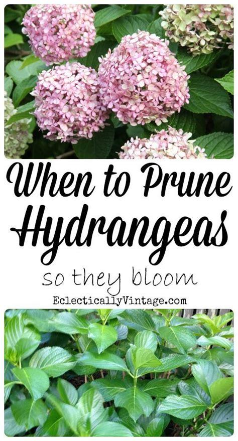 how do you prune hydrangea bushes 25 best ideas about limelight hydrangea on pinterest hydrangea paniculata hydrangea tree and