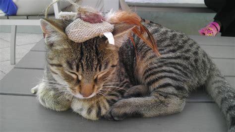 welche zwei katzenrassen sind das katze katzen rasse