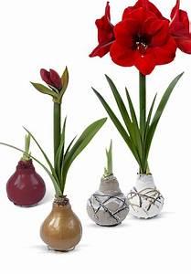 Amaryllis In Wachs : zauberhaft in wachs gegossen touch of wax amaryllis ~ A.2002-acura-tl-radio.info Haus und Dekorationen