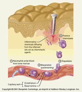 Nonspecific Defenses Against Microorganisms