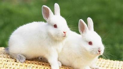 Rabbits Wallpapers Rabbit Windows