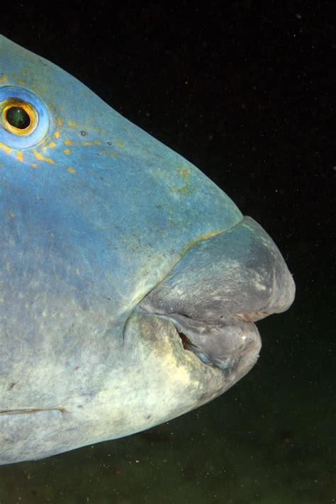 grouper diving scuba pets eastern fish