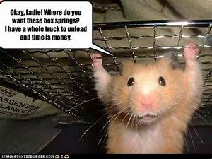 Funny Animal: Funny hamsters with captions