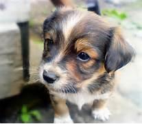 Sad Puppy Pictures Ech...Sad Puppy