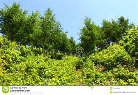 pictures of plants and trees fresh plants and trees royalty free stock photography image 17802427