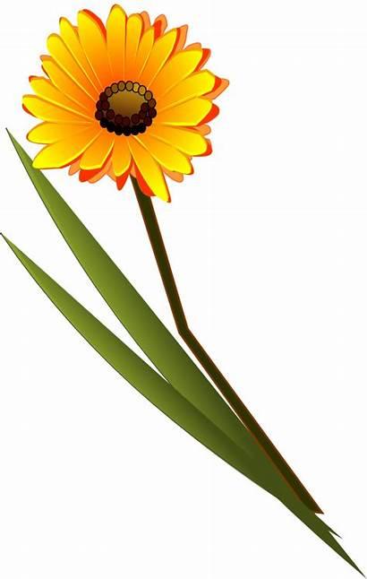 Clip Flowers Gerbera Clipart Svg Daisy Gerber