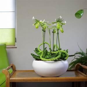 Cache Pot Orchidée : 5 conseils pour l 39 entretien de l 39 orchid e paphiop dilum ou sabot de v nus le pouvoir des fleurs ~ Teatrodelosmanantiales.com Idées de Décoration