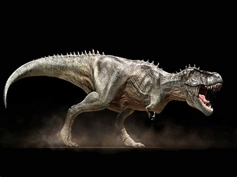rex wallpapers animals library