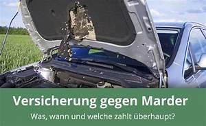 Marder Vom Auto Fernhalten : was zahlt die versicherung beim marderschaden alles wichtige ~ Frokenaadalensverden.com Haus und Dekorationen