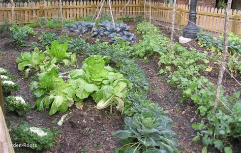 Gallery Of Home Vegetable Garden Design Ideas Amazing With