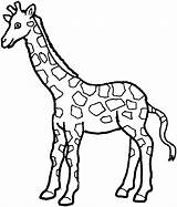 Zoo Animals Giraffe Coloring Pages Freecoloringpagefun Animal Printable Printables Sheet Fun sketch template