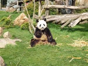 chambre d hote pres du zoo de beauval hotels gites et chambres d 39 hôtes à proximité du zoo parc