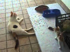 I gattini sono innamorati, la mamma della cucciola 'terrorizzata' è gelosissima! FunnyCat TV