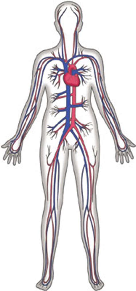 blood circulation clipart   cliparts
