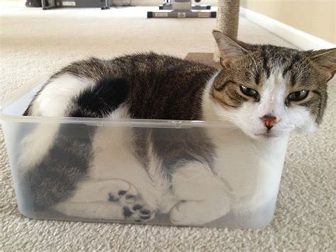 indisputable proof  cats  liquid