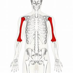Chest 101  An Anatomical Guide To Training   Fitness