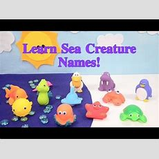 Learn Sea Creature Animal Names With Bath Toys For Toddler Preschooler Kids English And Japanese