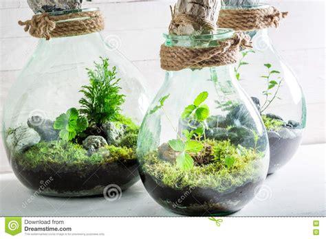 Erstaunliche Lebende Pflanzen In Einem Glas Mit