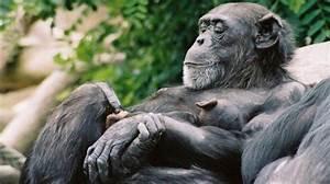 African Animals  10 Weirdest Facts About Animals Of Africa