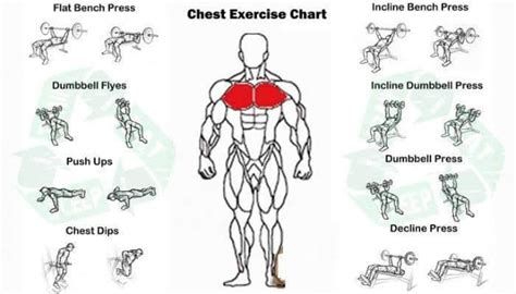 Exercises For Chest  A List Of Excellent Chest Exercises