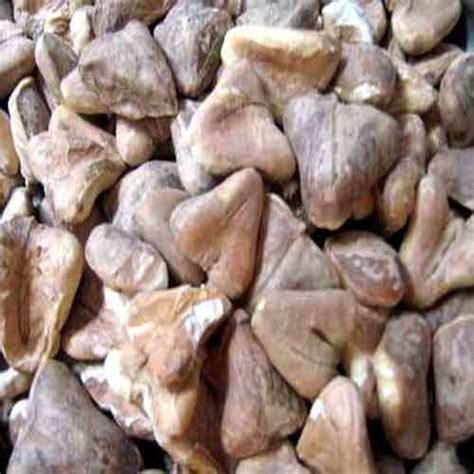 ayurvedic raw herbs dry singhara manufacturer  navi