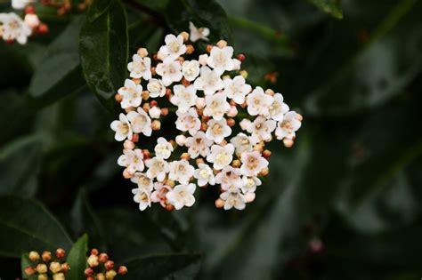 fiori profumati invernali fiori invernali pi 249 profumati