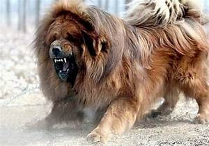 Top 6 Scariest Looking Dogs